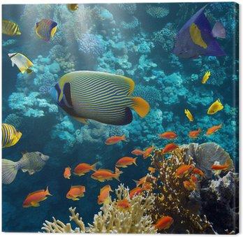 Obraz na Plátně Korály a ryby