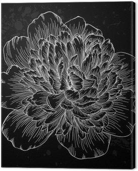 Obraz na Plátně Krásná černá a bílá pivoňka květ izolovaných na pozadí. Ručně kreslená obrysy a tahy.