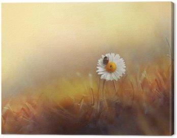 Obraz na Plátně Květinové sedmikrásky Heřmánek s Beruška v trávě na zlaté pozadí letním slunci při západu slunce v paprscích světla. Krásná elegantní romantické umělecký obraz. Tapety desktop, design pohlednice.