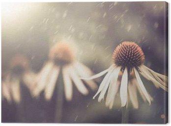 Obraz na Plátně Letní květiny za deště