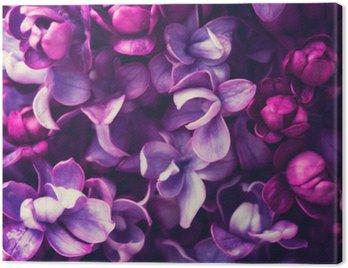 Obraz na Plátně Lila květiny na pozadí