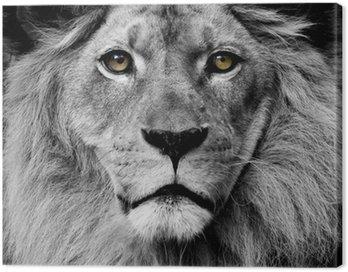 Obraz na Plátně Lion oči