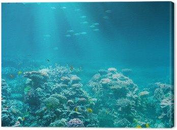 Obraz na Plátně Moře nebo oceánu podvodní korálový útes s žralokem
