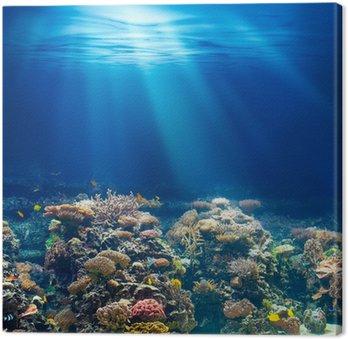 Obraz na Plátně Moře nebo oceánu podvodní korálový útes šnorchlování nebo potápění backgrou