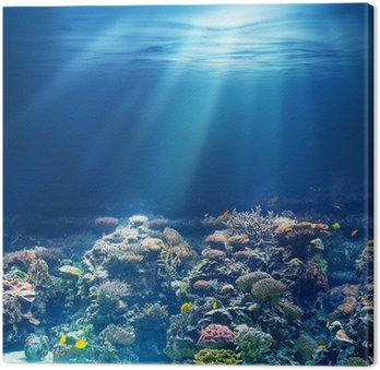 Obraz na Plátně Moře nebo oceánu podvodní korálový útes