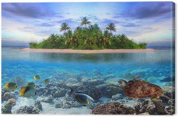 Obraz na Plátně Mořský život na tropickém ostrově Maledivy
