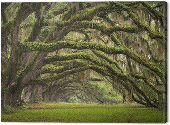 Obraz na Plátně Oaks Avenue Charleston SC plantáž Live Oak stromy les