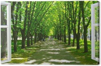 Obraz na Plátně Otevřelo okno do krásného parku s mnoha zelenými stromy