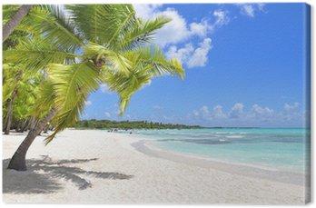 Obraz na Plátně Palmy a tropické pláži