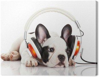 Obraz na Plátně Pes poslouchá hudbu se sluchátky na uších izolovaných na bílém backgro