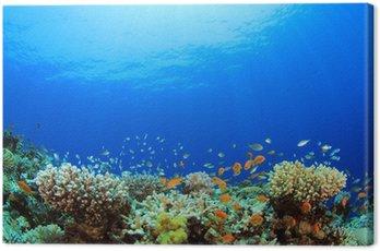 Obraz na Plátně Podvodní Coral Reef a tropické ryby