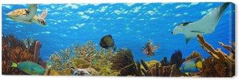 Obraz na Plátně Podvodní panorama tropické útesu v Karibiku