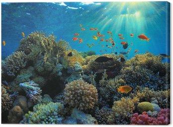 Obraz na Plátně Podvodní pohled