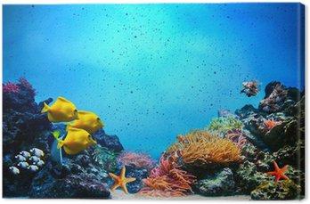 Obraz na Plátně Podvodní scény. Korálový útes, ryba skupiny v čiré vody oceánu