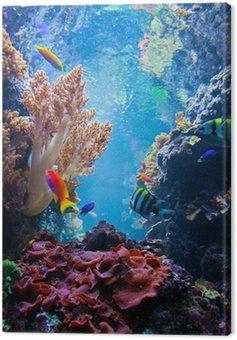 Obraz na Plátně Podvodní scény s rybami, korálový útes