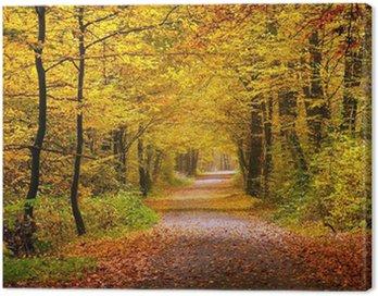 Obraz na Plátně Podzimní les