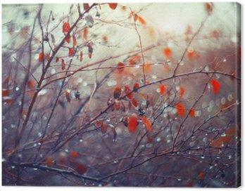 Obraz na Plátně Pozadí s větvemi a dešťové kapky