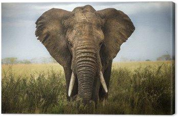 Obraz na Plátně Pozadí slon