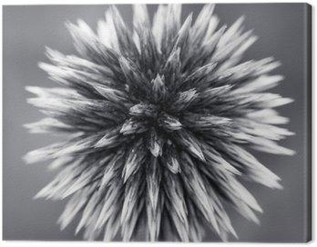 Obraz na Plátně Purple Globe Thistle B
