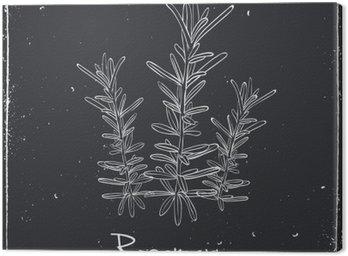 Obraz na Plátně Rosemary bylin a koření.
