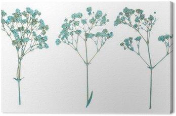 Obraz na Plátně Sada divokých suchých lisované květiny