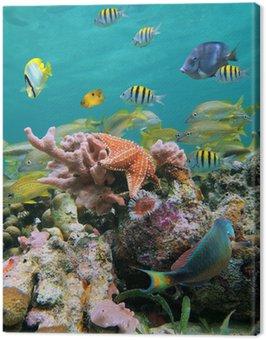 Obraz na Plátně Sea-life barvy