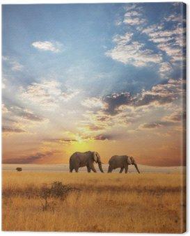 Obraz na Plátně Slon