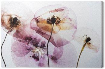 Obraz na Plátně Suché máky