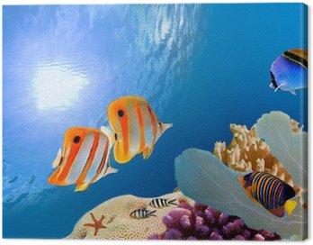 Obraz na Plátně Tropické korálové útesy.