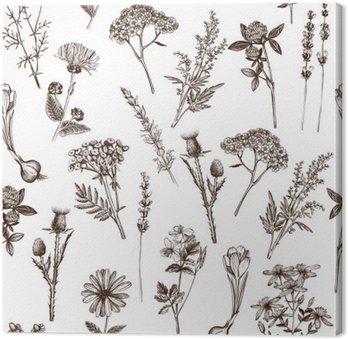 Obraz na Plátně Vektorové bezproblémové vzorek s inkoustem ruky čerpá léčivých bylin skica