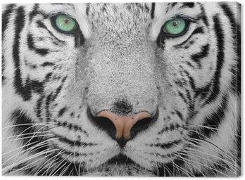 Obraz na Plátně White tiger