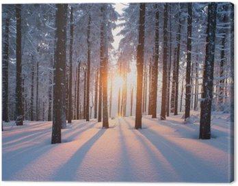Obraz na Plátně Západ slunce v lese v zimním období