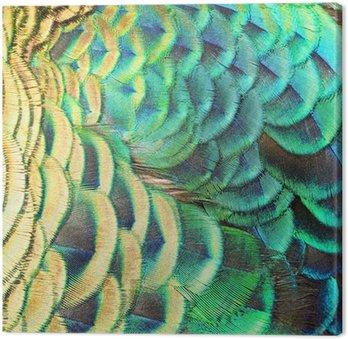 Obraz na Plátně Zelená paví peří