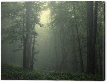 Obraz na Plátně Zelený les po dešti