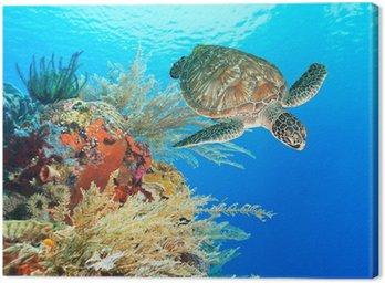 Obraz na Plátně Želva a korálů