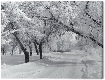 Obraz na Plátně Zimní park, krajina