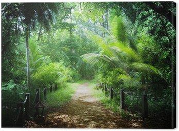 Obraz na Plátně Způsobem v džungli Seychelské ostrovy