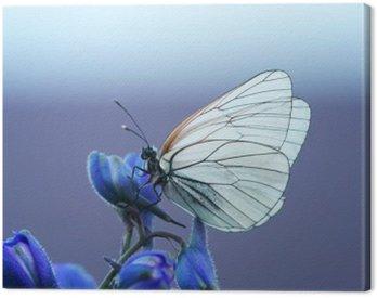 Obraz na Płótnie Белая бабочка на синем цветке