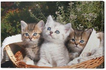3 tomcat