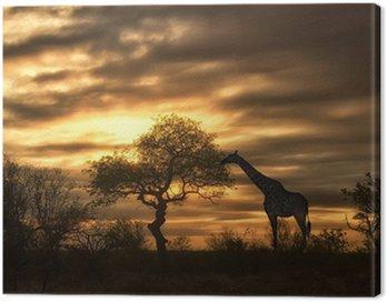 African żyrafa spaceru w zachodzie słońca