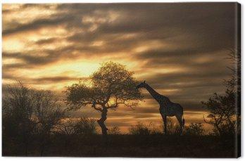 Obraz na Płótnie African żyrafa spaceru w zachodzie słońca