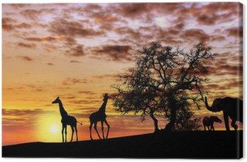 Afrykański zachód słońca