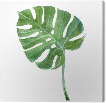 Obraz na Płótnie Akwarela monstera liści