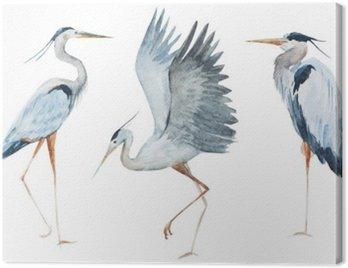 Akwarela ptaki czapla
