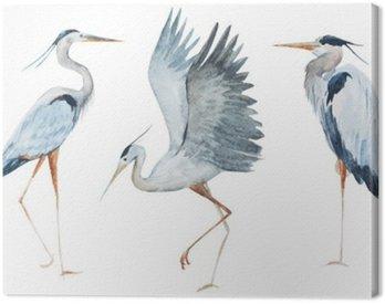 Obraz na Płótnie Akwarela ptaki czapla