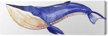 Obraz na Płótnie Akwarela wieloryba, ręcznie malowane ilustracji na białym tle
