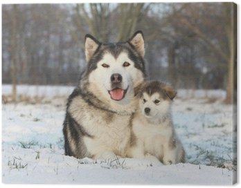 Alaskan malamute i jej dziecko na śniegu