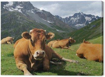 Alpy krowa