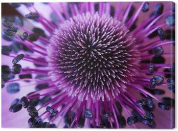 Obraz na Płótnie Anamone kwiat