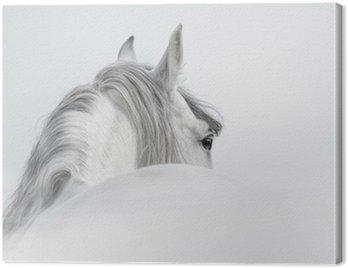 Obraz na Płótnie Andaluzyjski Koń w mgle